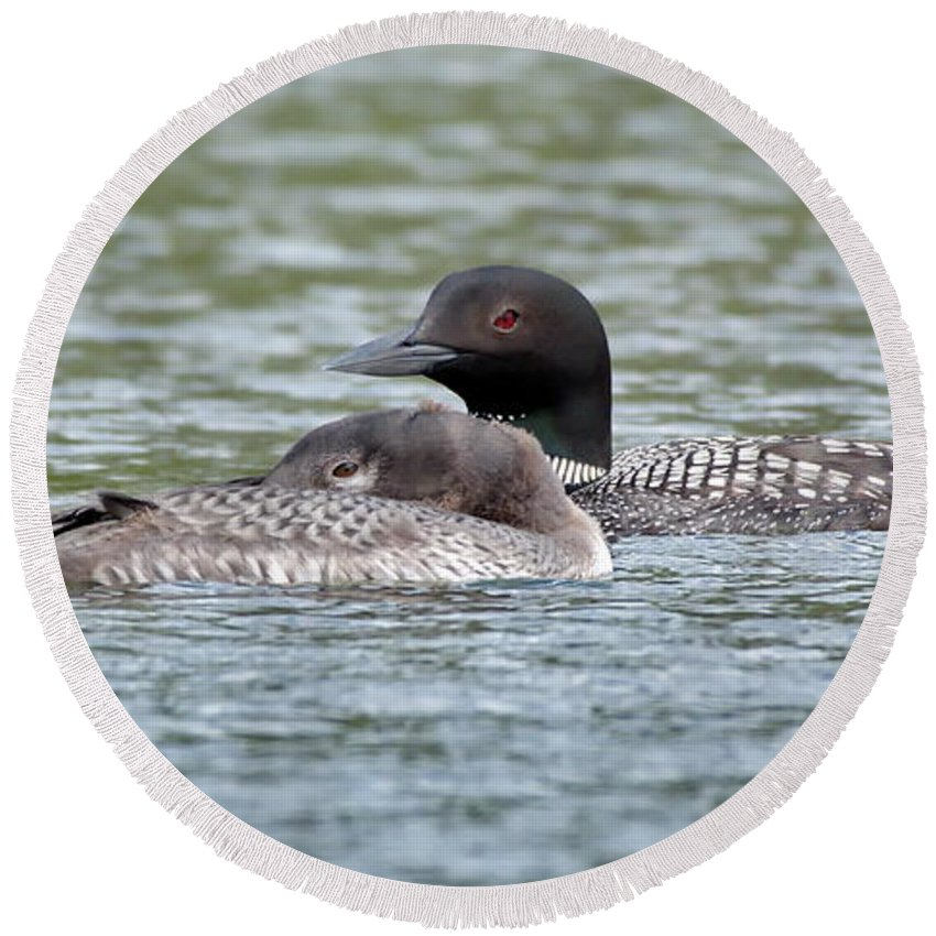 Nature Round Beach Towel featuring the photograph Loon Lullaby by Crystal Massop