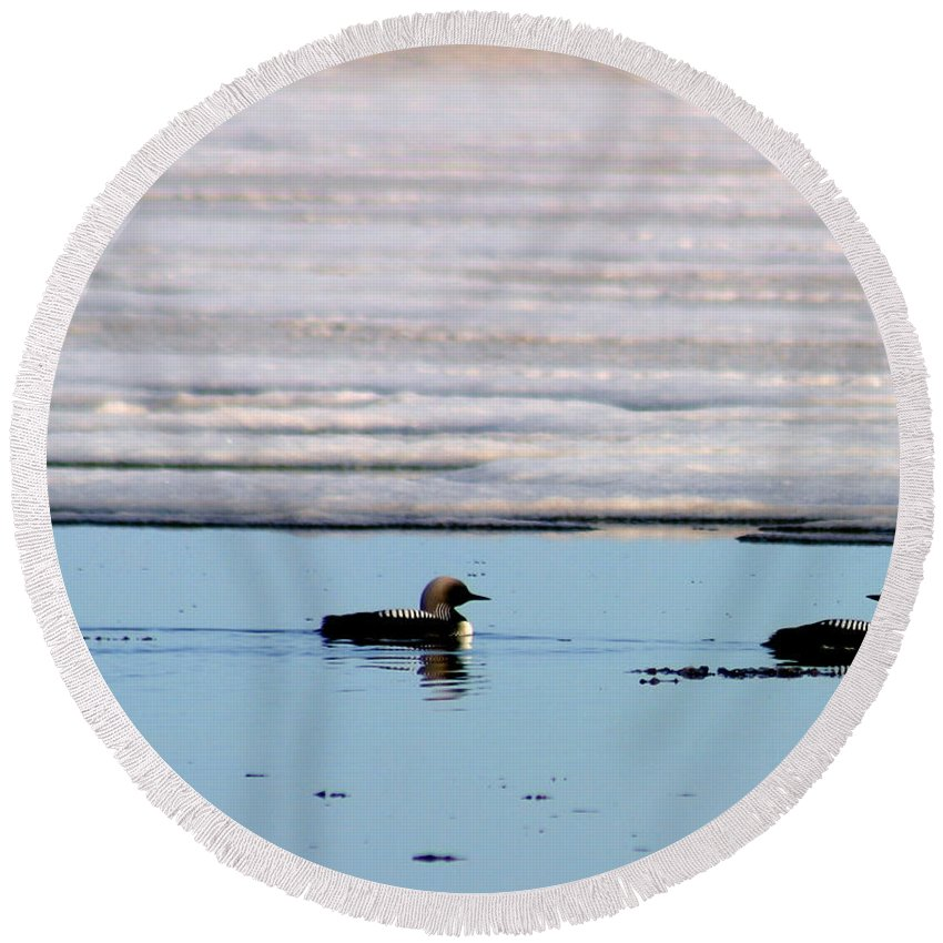 Loons Round Beach Towel featuring the photograph Loon On The Arctic by Anthony Jones
