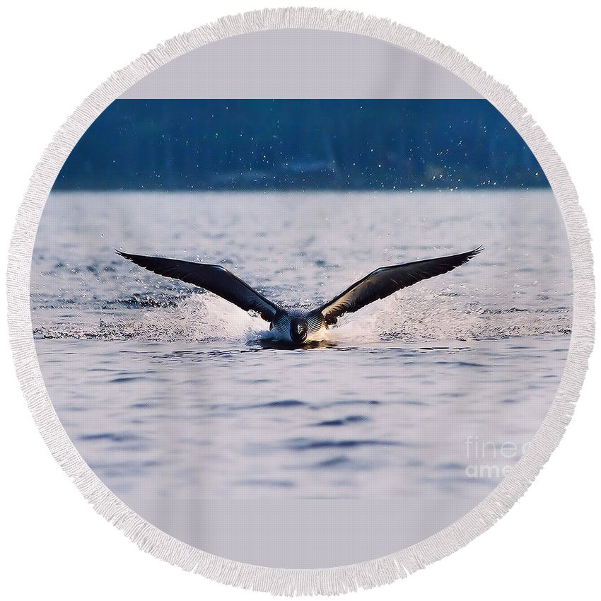 Common Loon Round Beach Towel featuring the photograph Loon Take Off Aborted by Sandra Huston