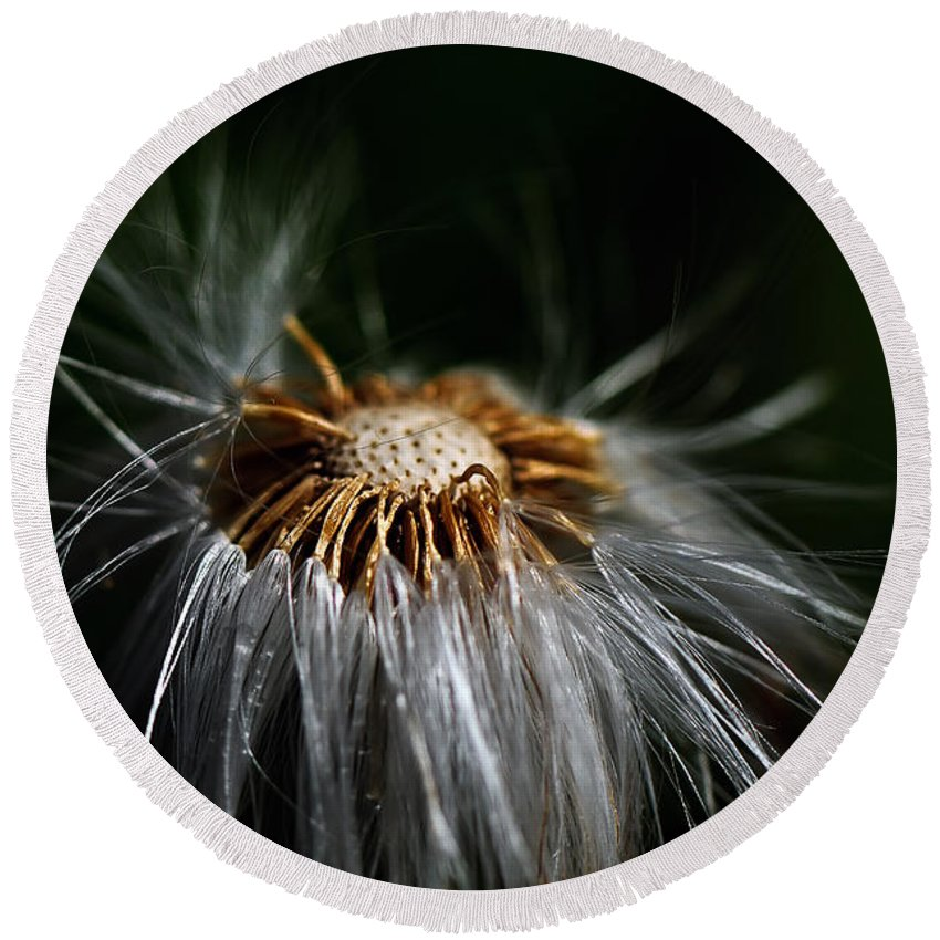 Dandelion Round Beach Towel featuring the photograph Losing It by Lois Bryan