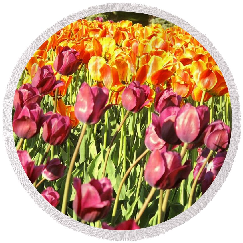 Tulips Round Beach Towel featuring the photograph Lots Of Tulips by Ian MacDonald