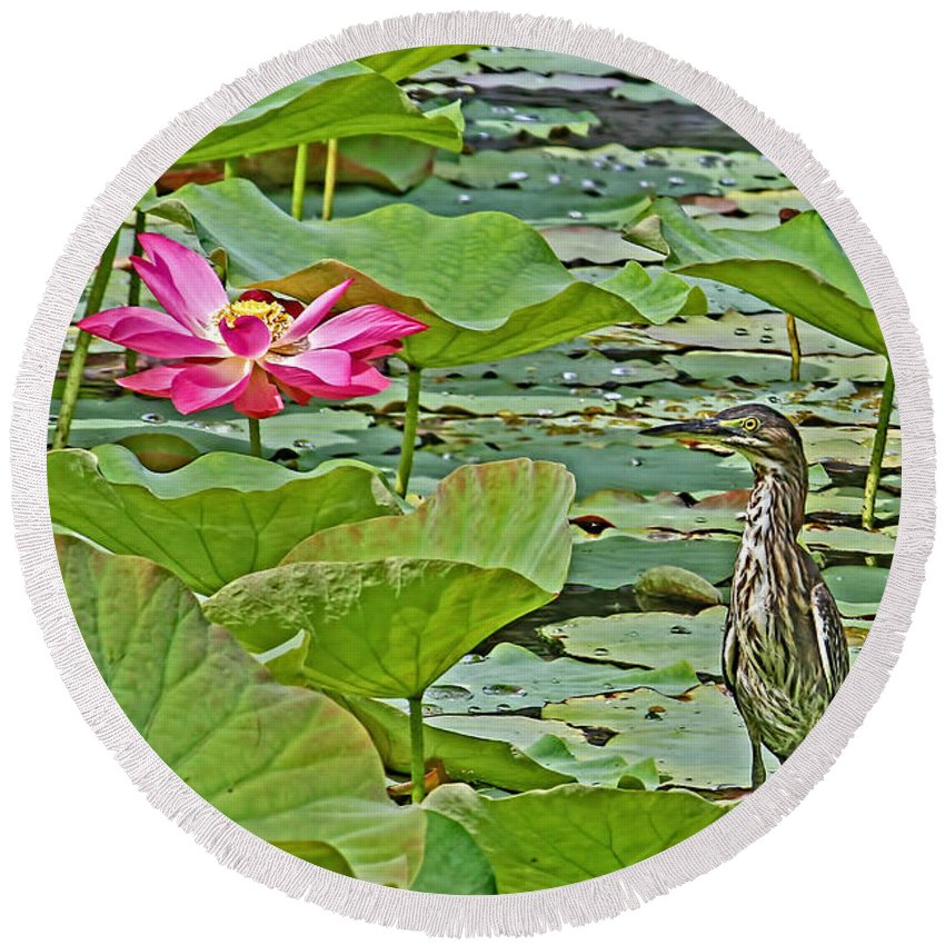 Green Heron Round Beach Towel featuring the photograph Lotus Blossom And Heron by HH Photography of Florida