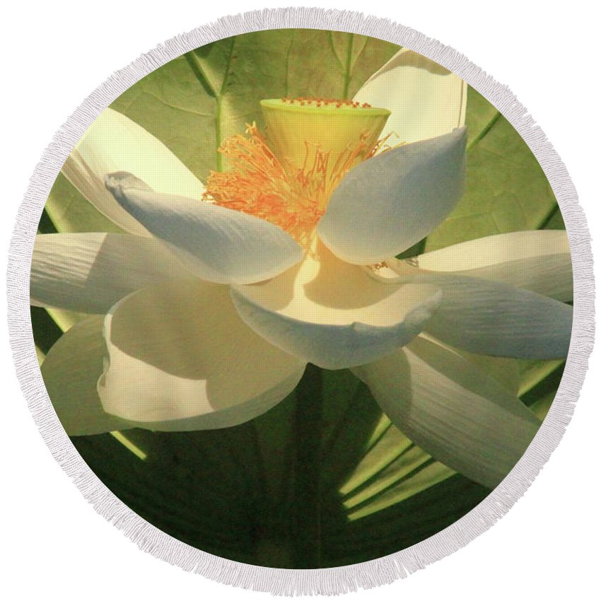 Orchids Round Beach Towel featuring the photograph Lotus Light by Geraldine Scull