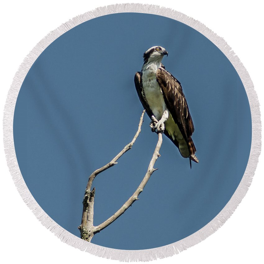 Osprey Round Beach Towel featuring the photograph Love Call by Norman Johnson