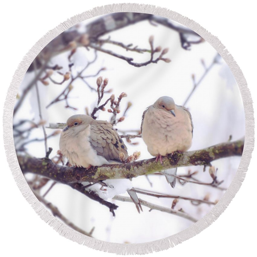 Doves Round Beach Towel featuring the photograph Love Is In The Air - Mourning Dove Couple by Kerri Farley