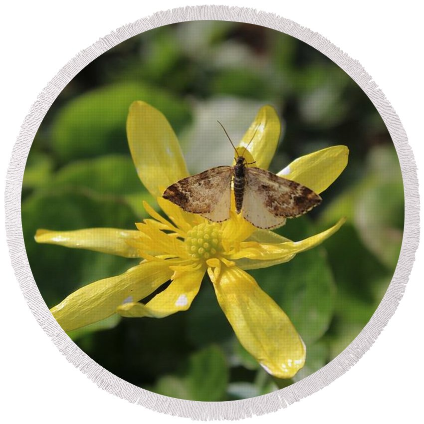 Mariposa Copper Butterfly Round Beach Towel featuring the photograph Tasting Marsh Marigold by Jane Powell