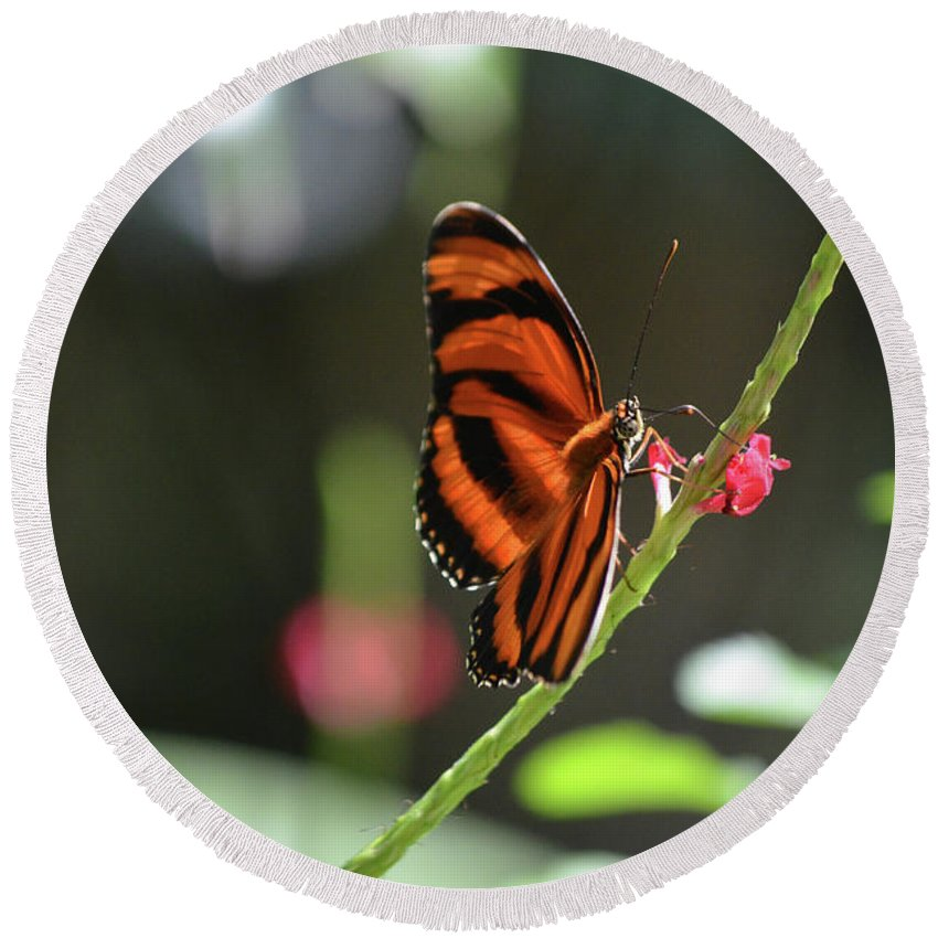 Butterfly Round Beach Towel featuring the photograph Lovely Orange Oak Tiger In The Spring by DejaVu Designs