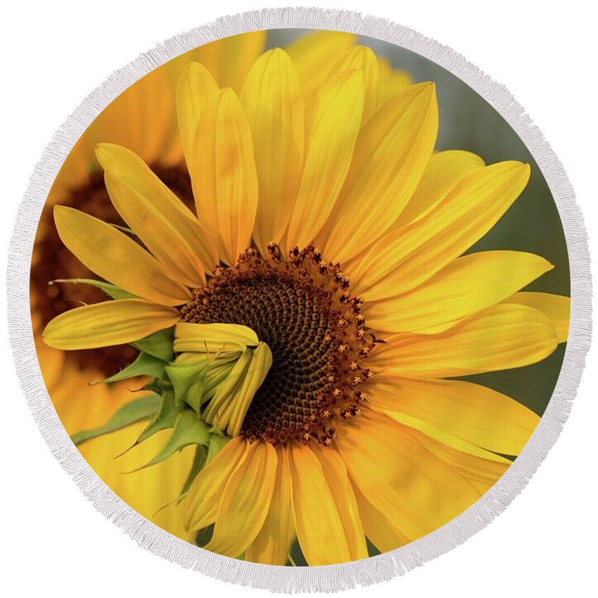 Lovely Sunflowers Round Beach Towel featuring the photograph Lovely Sunflowers by Lynn Hopwood