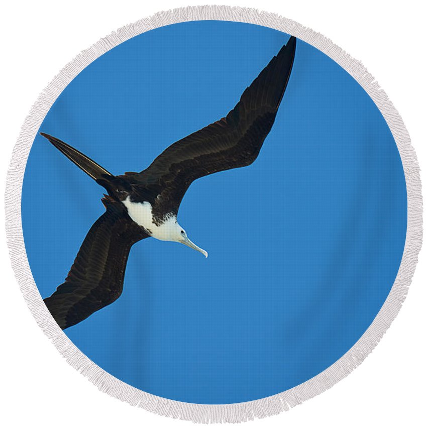 Photography Round Beach Towel featuring the photograph Low Angle View Of A Frigatebird Flying by Panoramic Images
