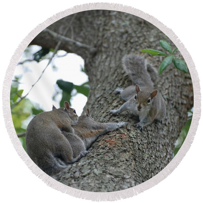 Squirrel Round Beach Towel featuring the photograph Luck Be A Lady by Rob Hans