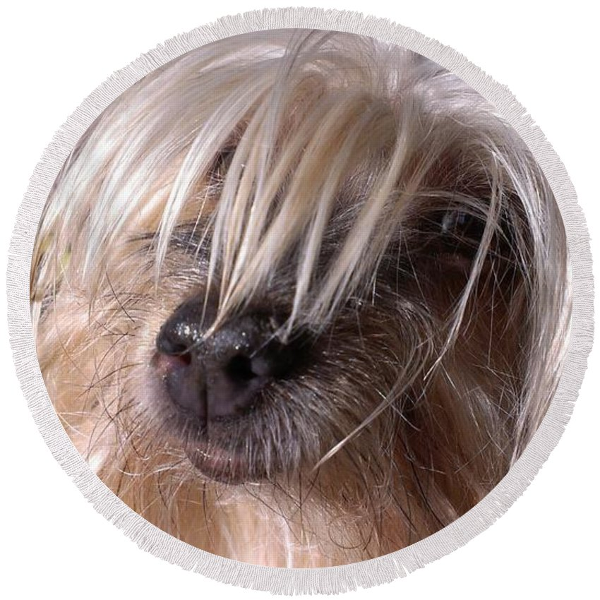 Yorkshire Terrier Round Beach Towel featuring the photograph Lucys Smile by LKB Art and Photography