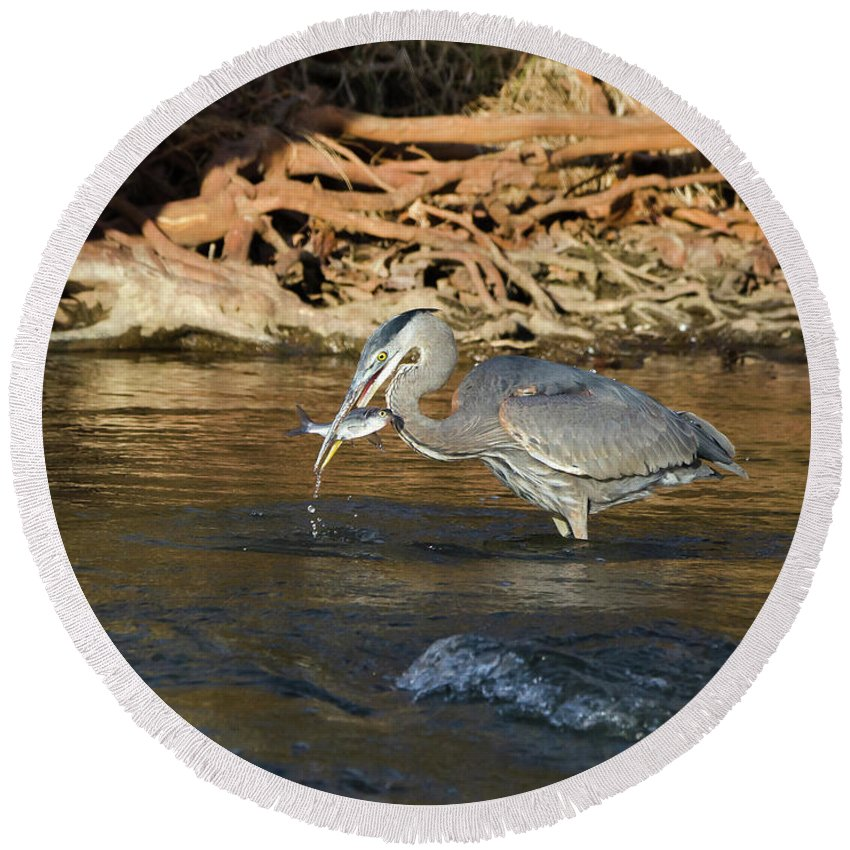 Heron Round Beach Towel featuring the photograph Lunch On The Neuse River by George Randy Bass