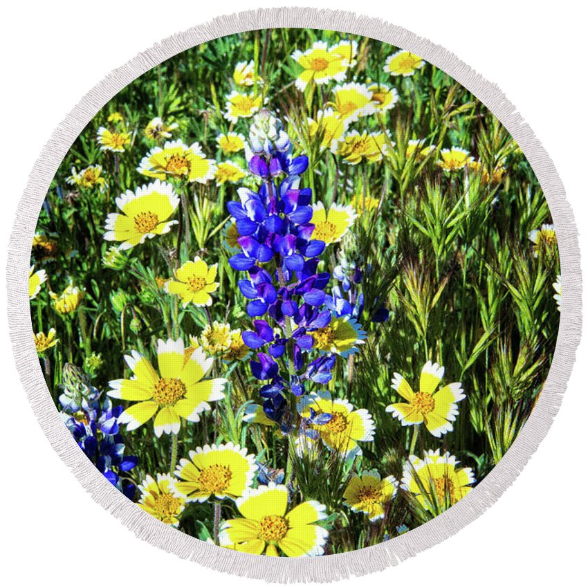 Lupine Round Beach Towel featuring the photograph Lupine Amidst Tidy Tips by Lynn Bauer