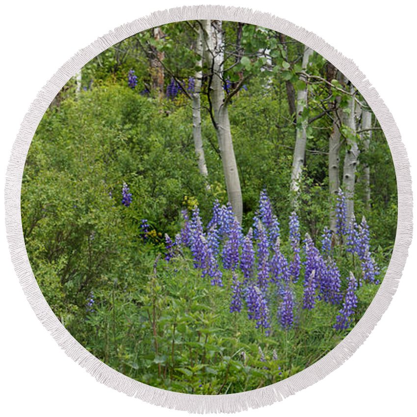 Aspen Round Beach Towel featuring the photograph Lupine And Aspens by Heather Coen