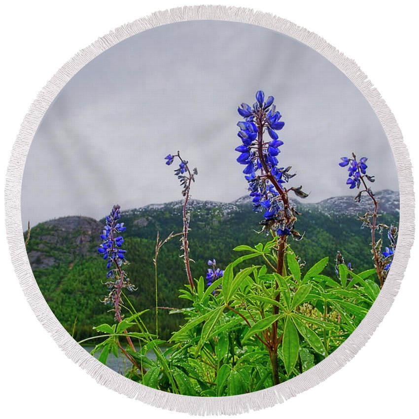 Lupines Round Beach Towel featuring the photograph Lupine And Mountains by David Arment