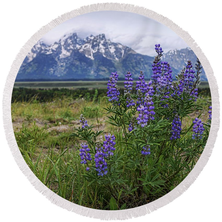 Lupine Beauty Round Beach Towel featuring the photograph Lupine Beauty by Chad Dutson
