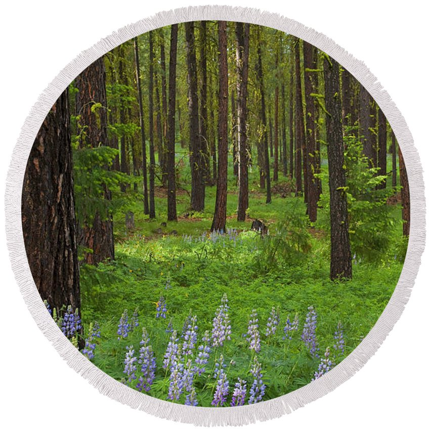 Forest Round Beach Towel featuring the photograph Lupine Carpet by Mike Dawson