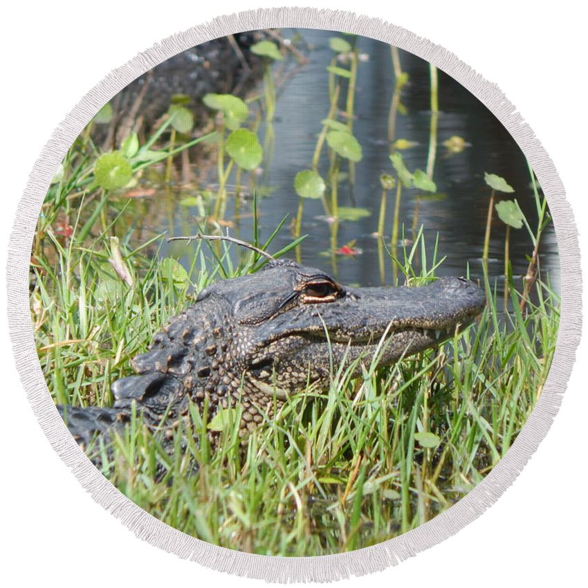 Alligator Round Beach Towel featuring the photograph Lurking In The Grass by Melissa Gallant