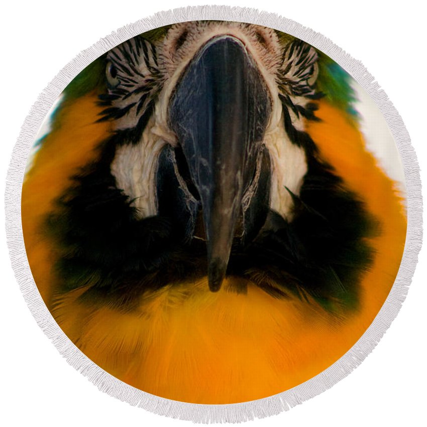 Macaw Round Beach Towel featuring the photograph Macaw IIi by Thomas Marchessault