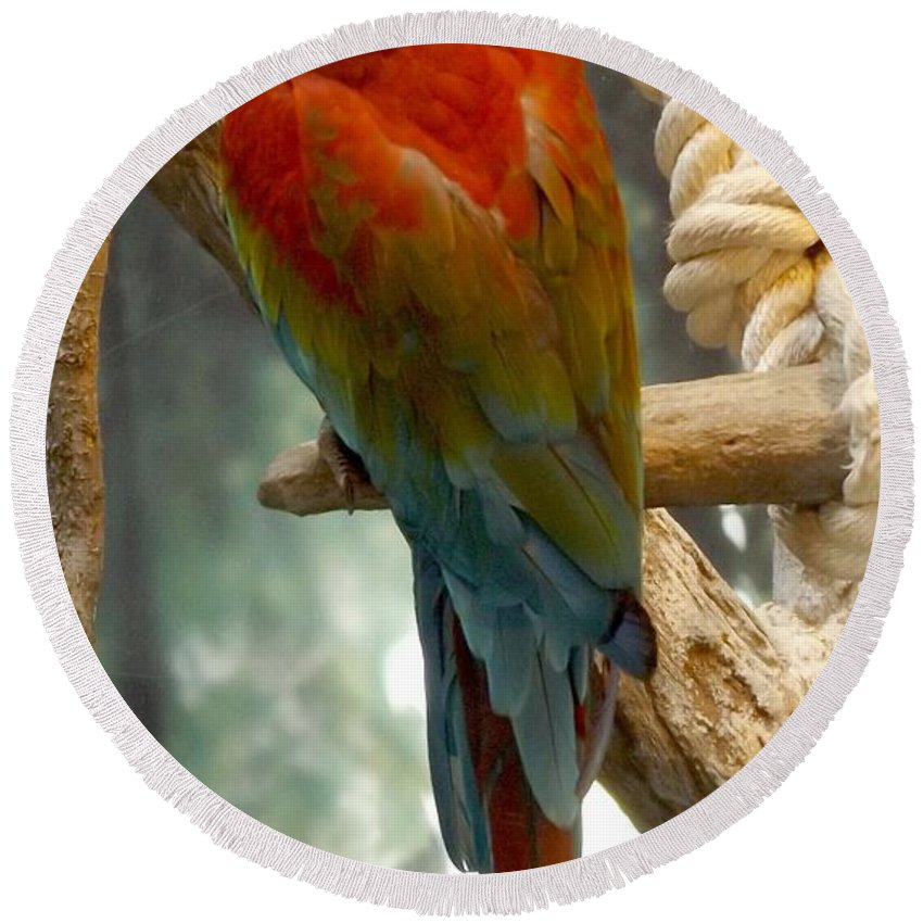 Macaw Round Beach Towel featuring the photograph Macaw by Julie Pappas