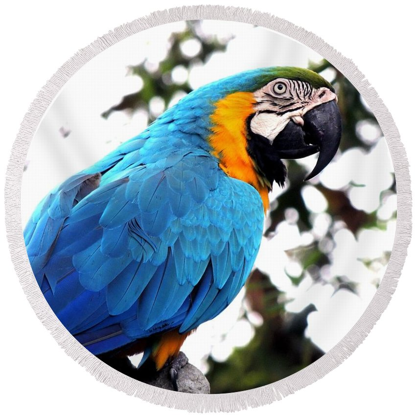 Parrot Round Beach Towel featuring the photograph Macaw Parrot by FL collection