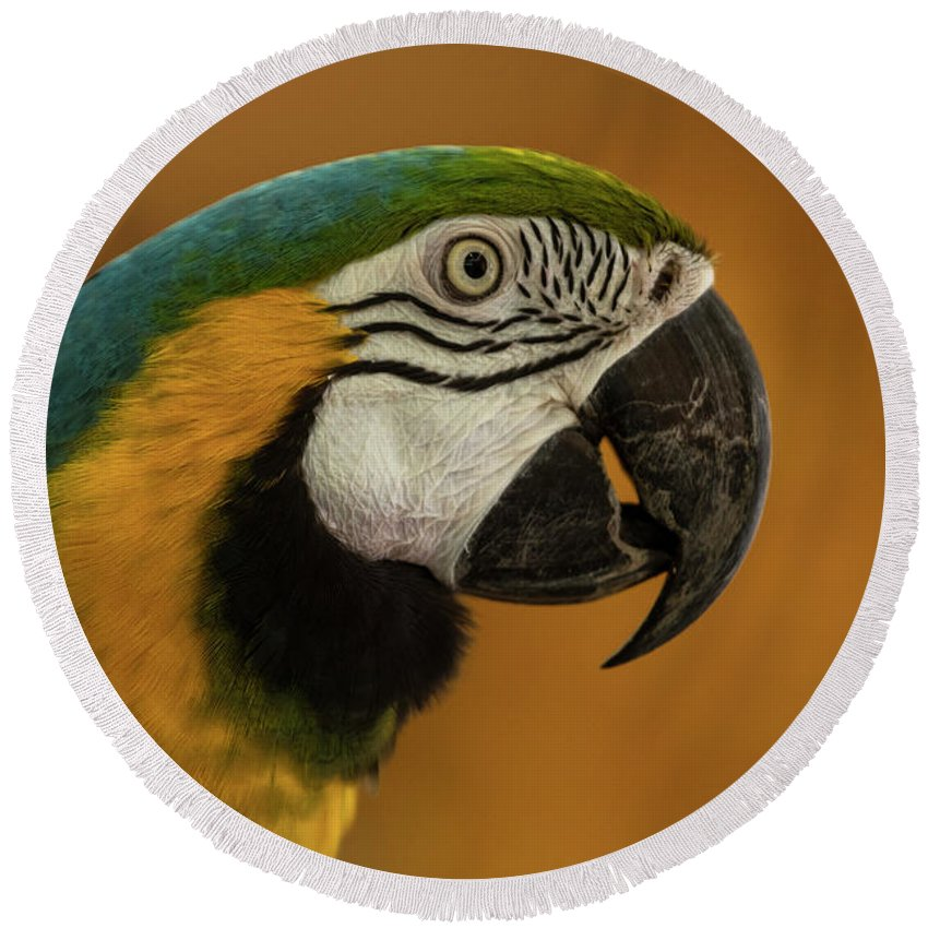 Macaw Round Beach Towel featuring the photograph Macaw Portrait by Julian Regan