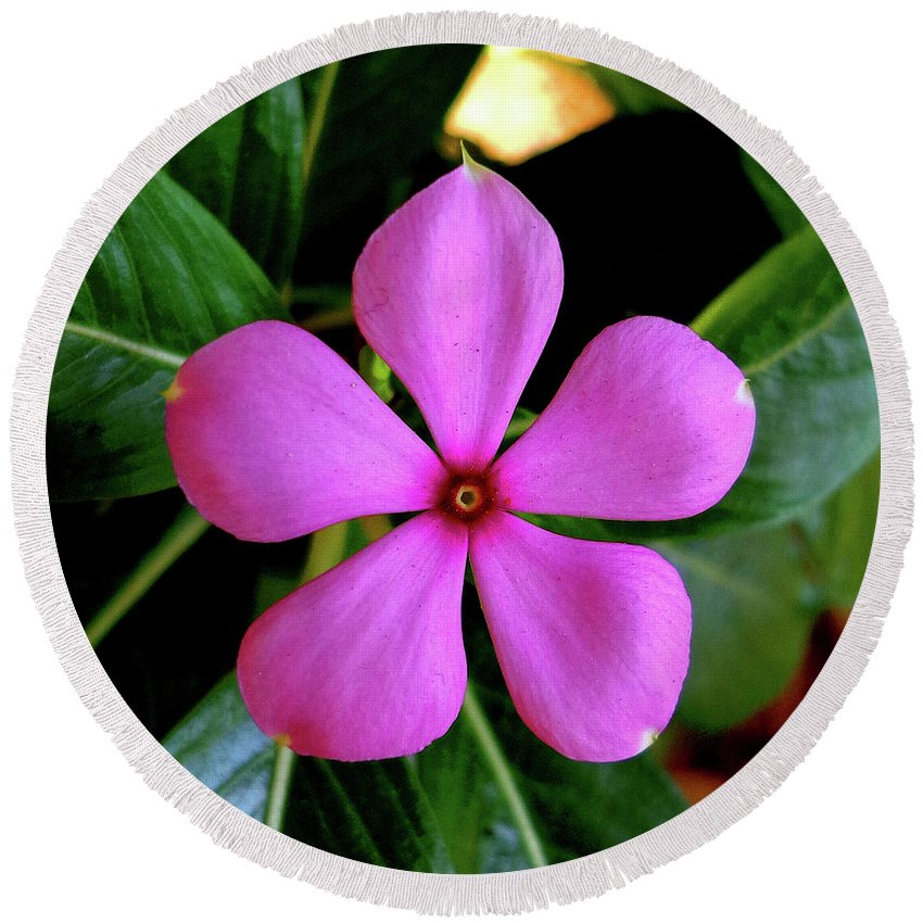 India Round Beach Towel featuring the photograph Madagascar Periwinkle by Misentropy