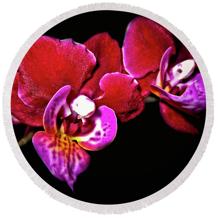 Top-artist Round Beach Towel featuring the photograph Magenta Phaleonopsis Orchid by Joyce Dickens