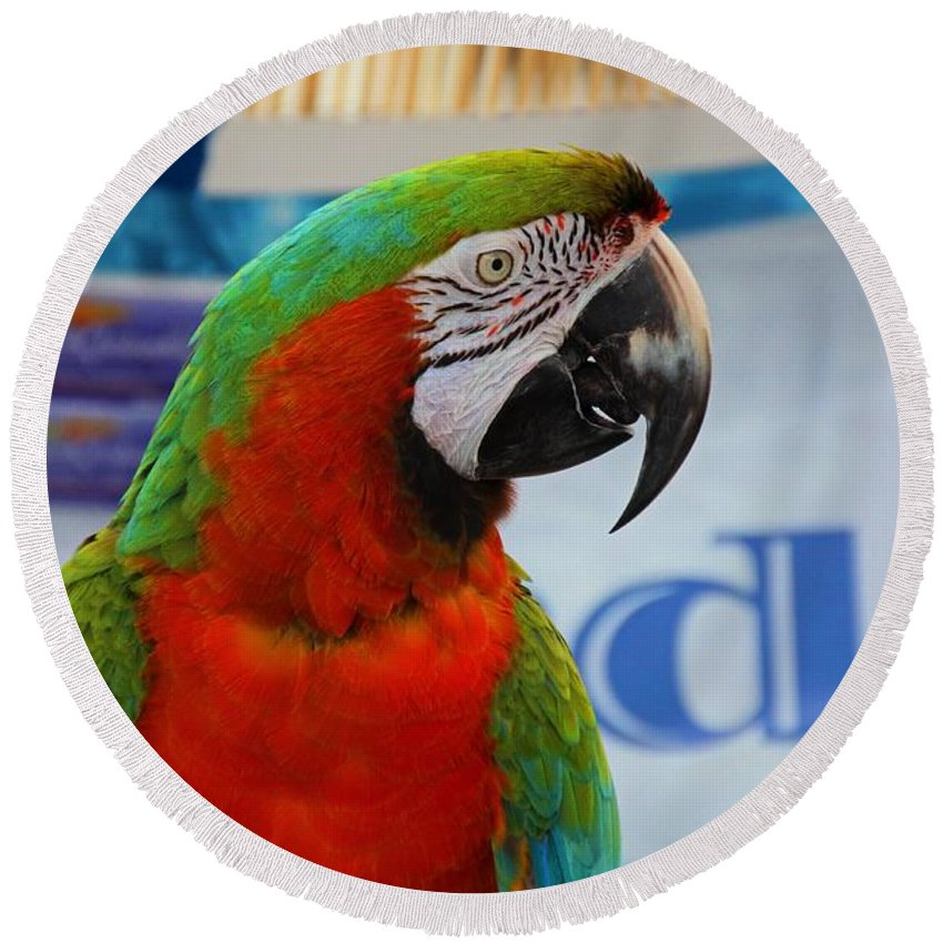 Macaw Round Beach Towel featuring the photograph Maggie by Michiale Schneider
