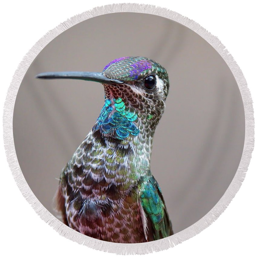 Magnificent Round Beach Towel featuring the photograph Magnificent Hummingbird Male by Ron D Johnson
