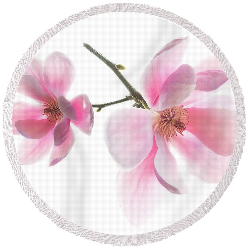 Magnolia Round Beach Towel featuring the photograph Magnolia Is The Harbinger Of Spring. by Usha Peddamatham