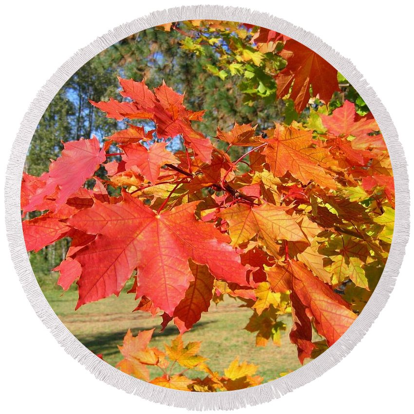 Maple Leaves Round Beach Towel featuring the photograph Magnificent Maple Leaves by Will Borden