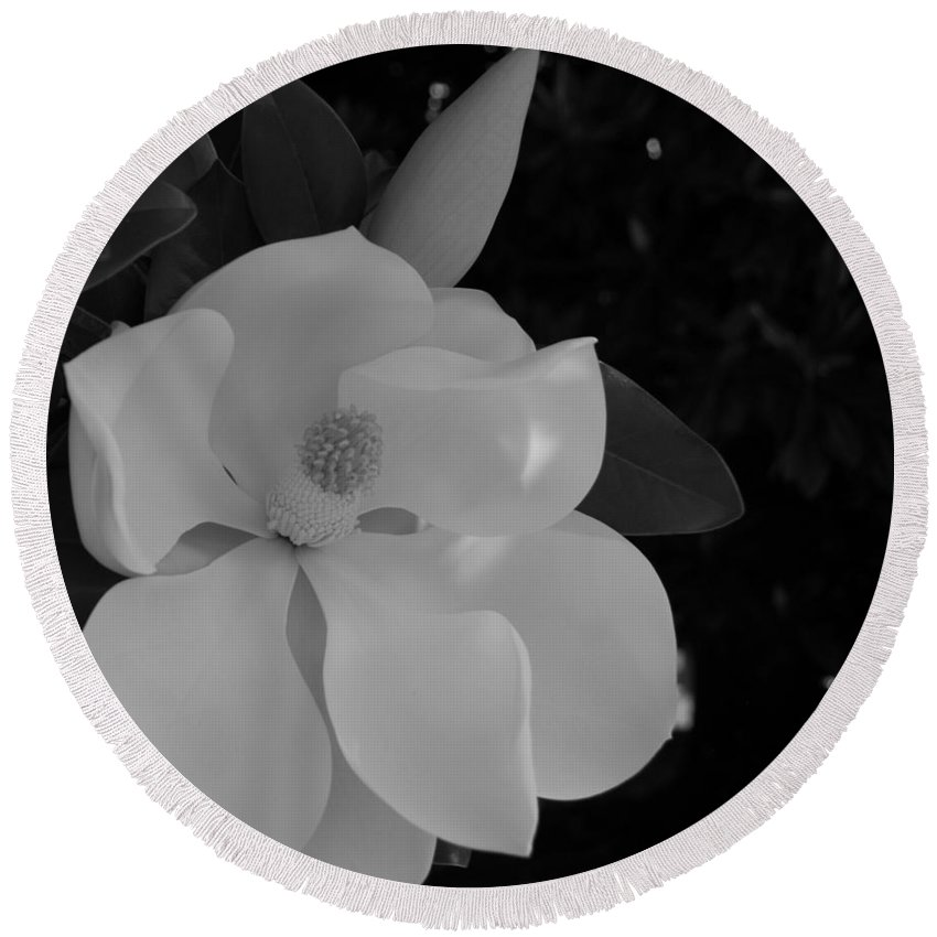Large Round Beach Towel featuring the photograph Magnolia And Blossom by Stefani Smirnes