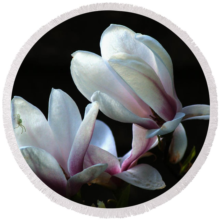 Magnolia Round Beach Towel featuring the photograph Magnolia And House Guest by Chris Day