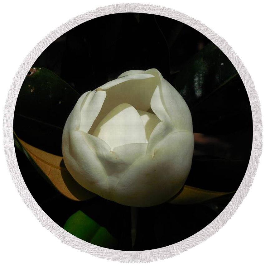 Flower Round Beach Towel featuring the photograph Magnolia Bloom by Mike Niday