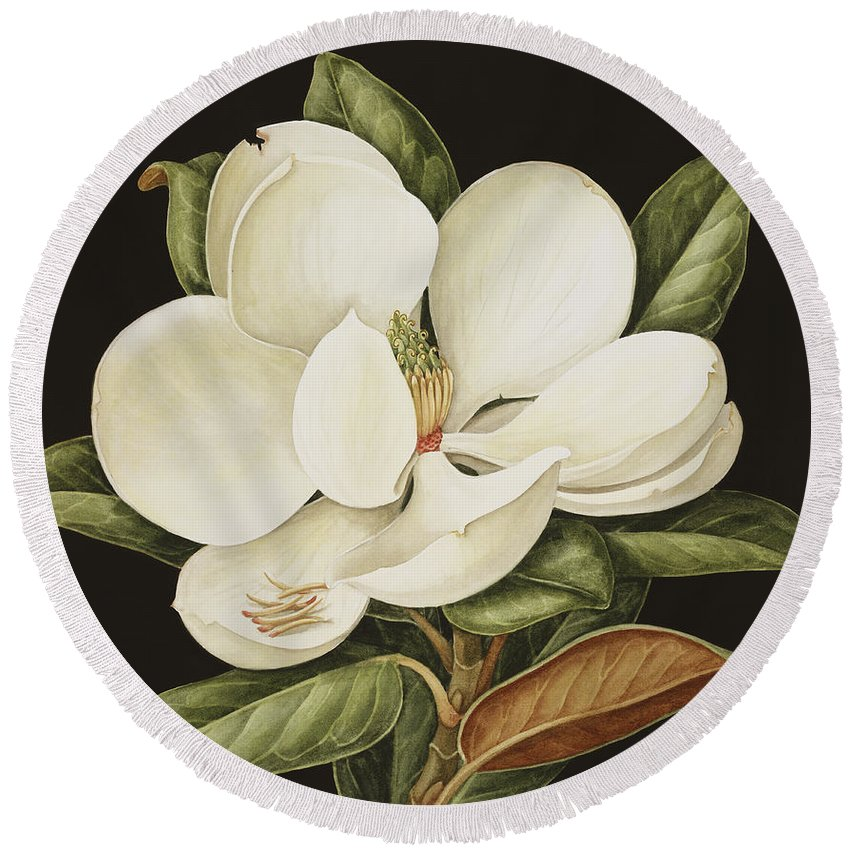 Still-life Round Beach Towel featuring the painting Magnolia Grandiflora by Jenny Barron