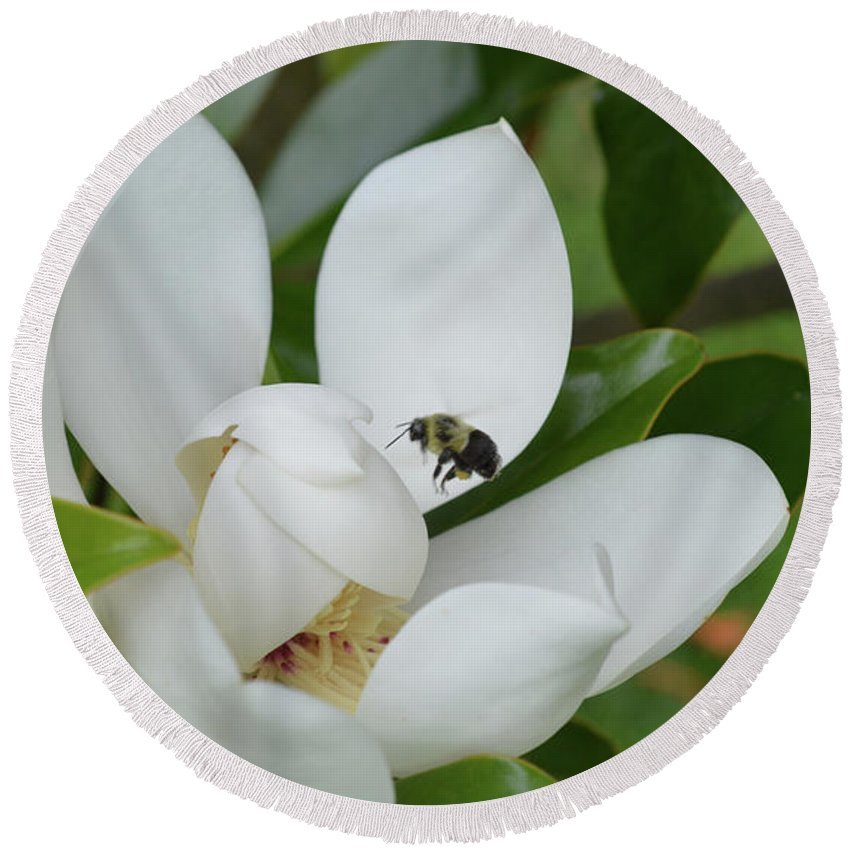Flower Round Beach Towel featuring the photograph Magnolia by MHmarkhanlon