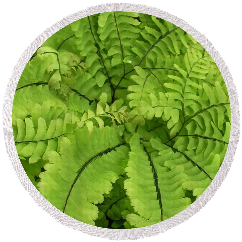 Fern Round Beach Towel featuring the photograph Maidenhair by Nelson Strong