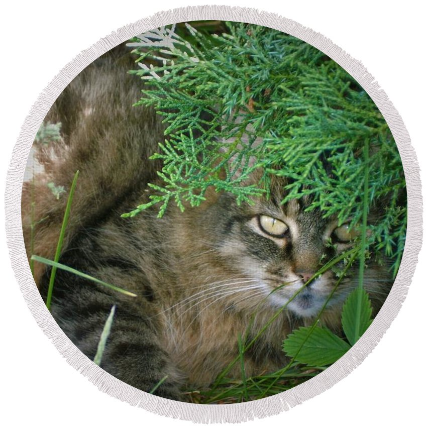 Maine Round Beach Towel featuring the photograph Maine Coon by Amanda Johnson