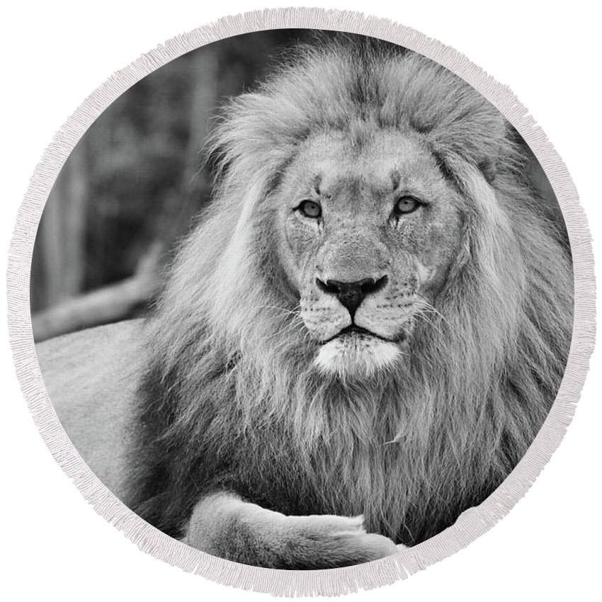 Lion Round Beach Towel featuring the photograph Majestic Male Lion Black And White Photo by Carsten Reisinger