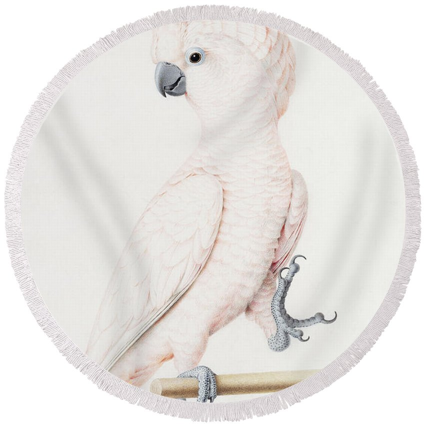 Parakeet Round Beach Towels