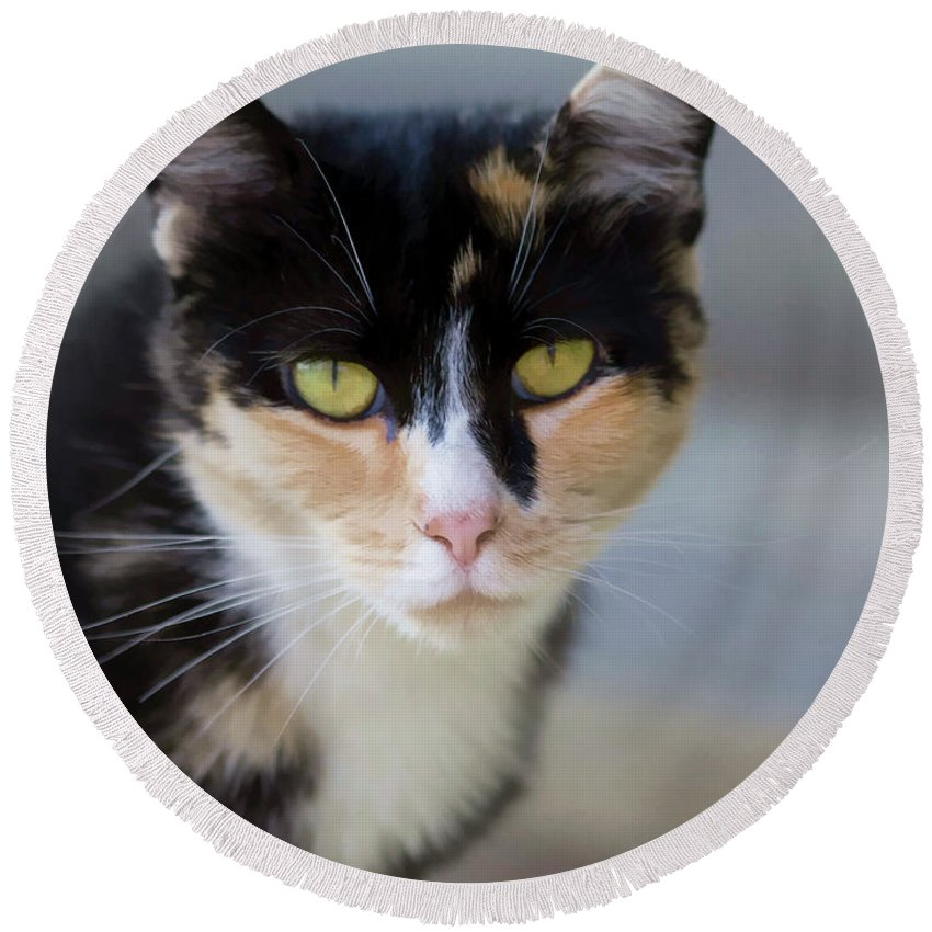Cat Round Beach Towel featuring the photograph Make My Day by Kathy Clark