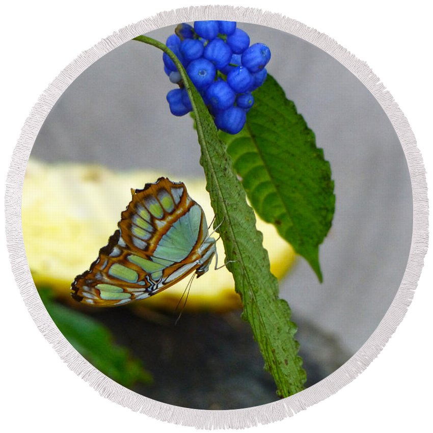 Butterfly Round Beach Towel featuring the photograph Malachite Butterfly by Darla Bruno