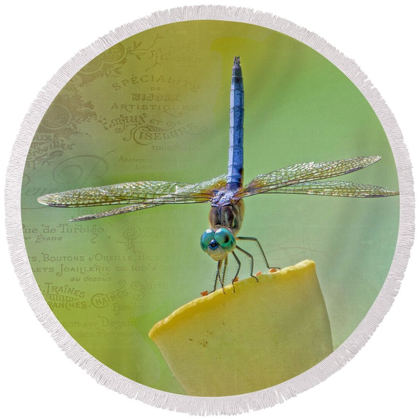 Dragonfly Round Beach Towel featuring the photograph Male Blue Dasher Dragonfly by TN Fairey
