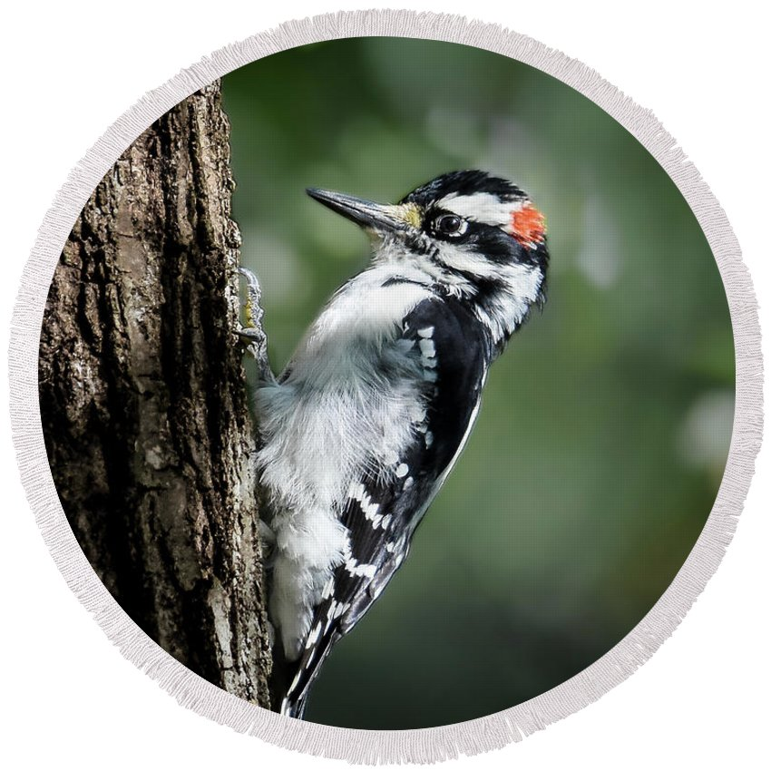 Downy Woodpecker Round Beach Towel featuring the photograph Male Downy by Amy Porter