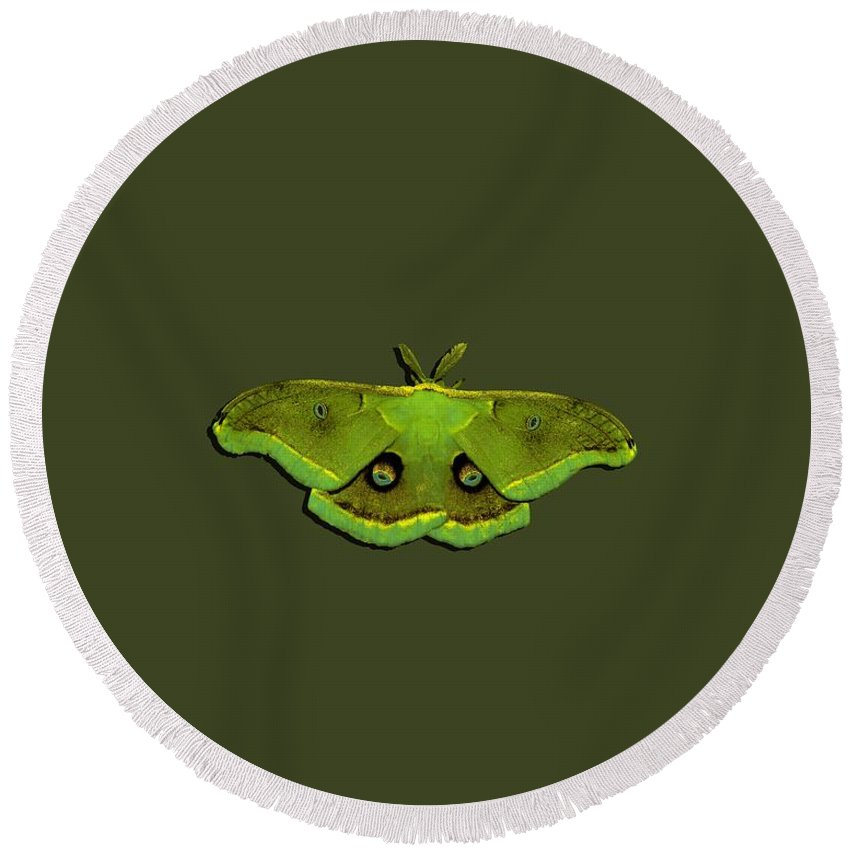 Moth Round Beach Towel featuring the photograph Male Moth Green And Yellow .png by Al Powell Photography USA
