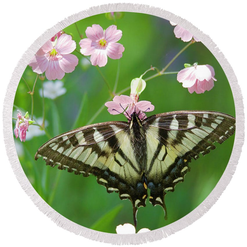 Butterfly Round Beach Towel featuring the photograph Male Tiger Swallowtail 5416 by Michael Peychich