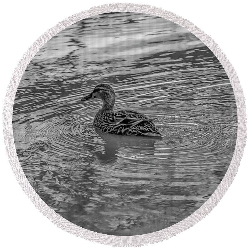 Duck Round Beach Towel featuring the photograph Mallard #e9 by Leif Sohlman