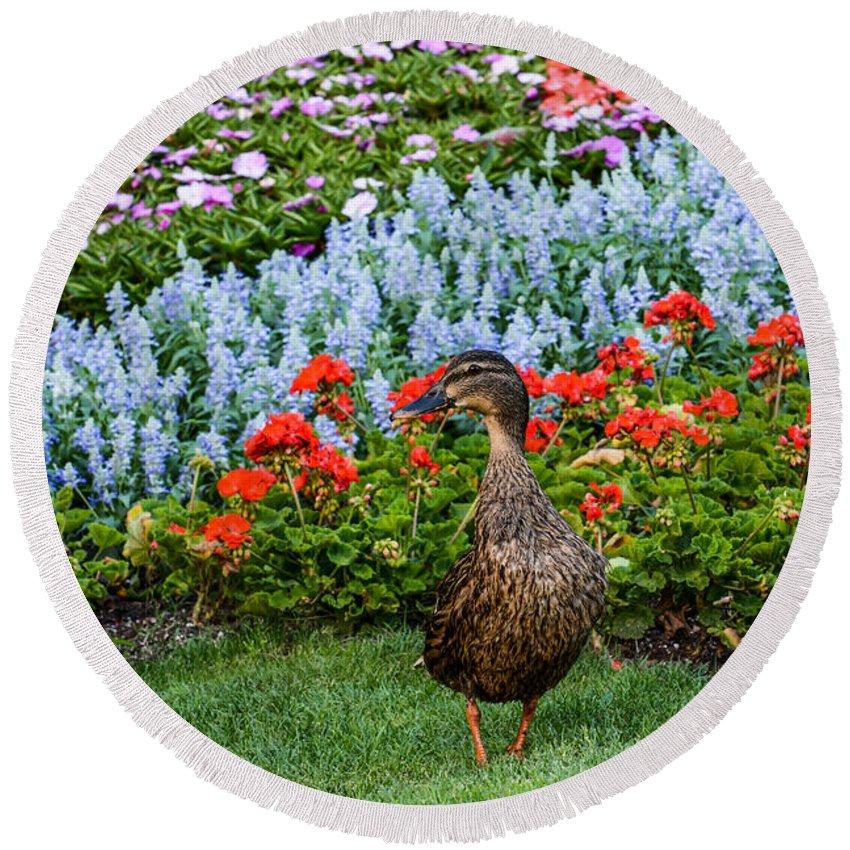 Duck Round Beach Towel featuring the photograph Mallard In The Garden by Zina Stromberg