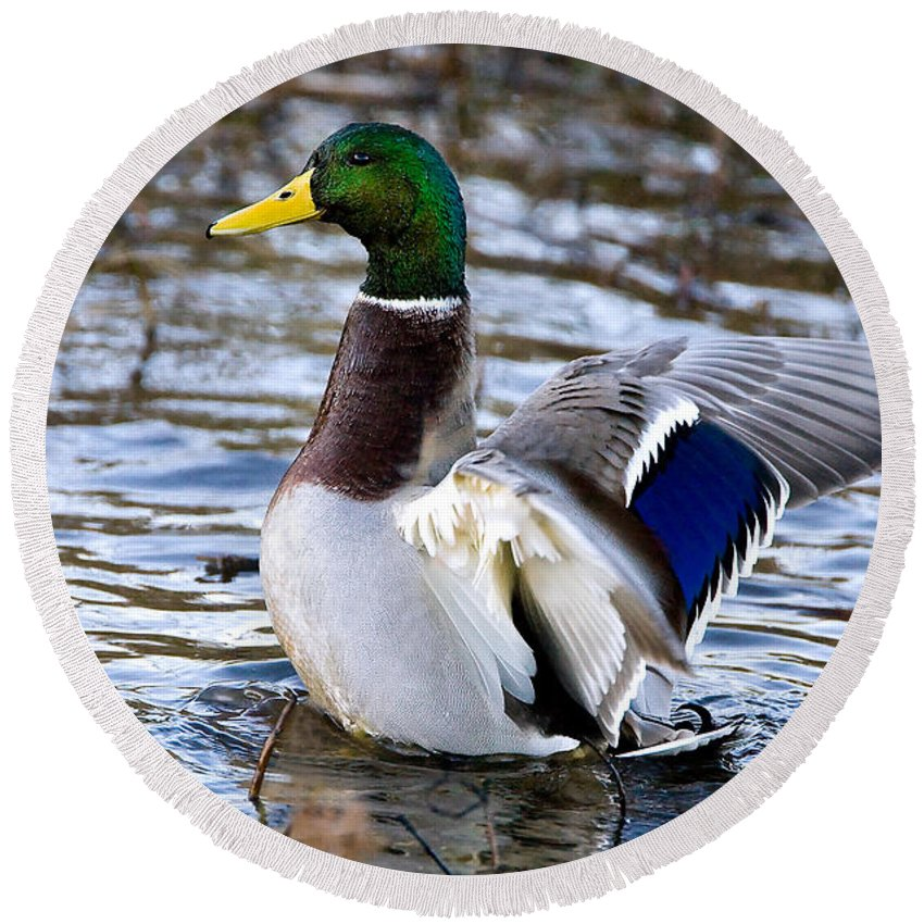 Mallard Round Beach Towel featuring the photograph Mallard Moment by William Jobes